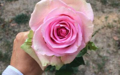 Jaká byla OSHO Mystická růže?